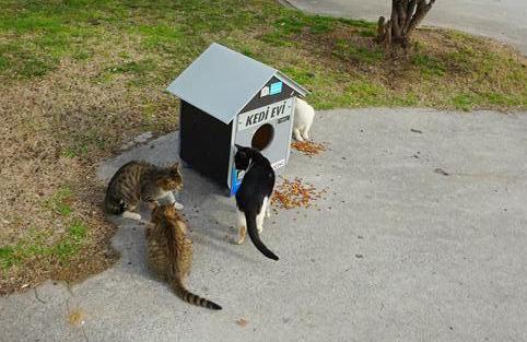 Maisons pour nos amis les bêtes, Istanbul (Turquie)
