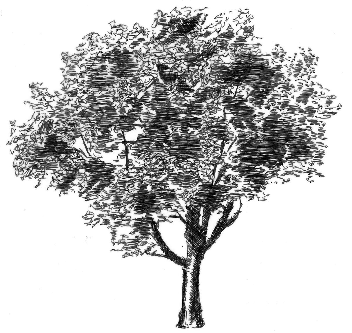 Zeichnung Baum klein